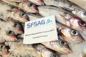 North Sea haddock is MSC certified