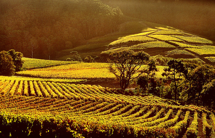 South African wines